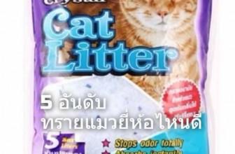 5 อันดับ ทรายแมวยี่ห้อไหนดี ฝุ่นน้อย